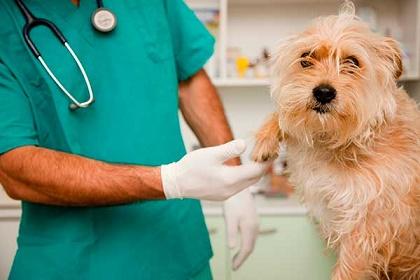 medico-veterinario